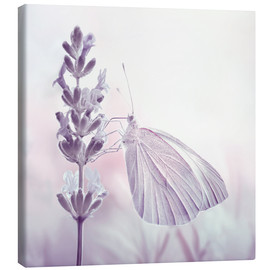 Canvas  Butterfly - Atteloi