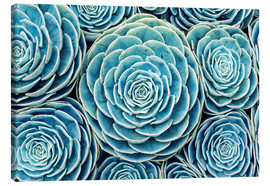 Canvas print  Succulents Swarm - Finlay and Noa