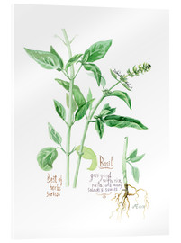 Acrylic print  Herbs & Spices collection: Basil - Verbrugge Watercolor