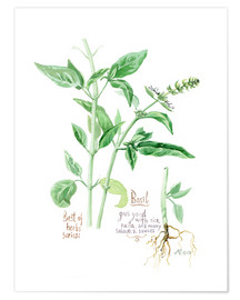 Premium poster Herbs & Spices collection: Basil