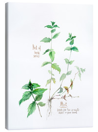 Canvas  Herbs & Spices collection: Mint - Verbrugge Watercolor