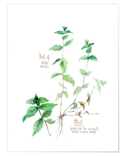 Premium poster Herbs & Spices collection: Mint