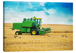 Canvas  Harvest on the field