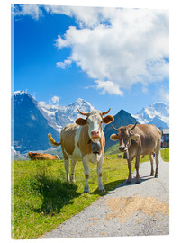 Acrylic print  Cows on the pasture