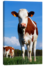 Canvas print  Cow Anna