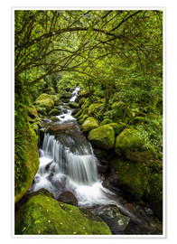 Premium poster Forest stream with waterfall