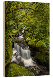 Wood print  Forest stream with waterfall - Thomas Klinder