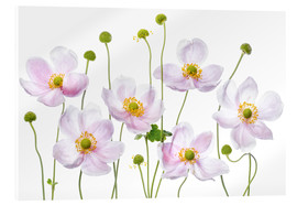 Acrylic print  Japanese Anemones - Mandy Disher