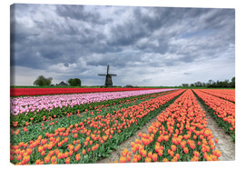 Canvas print  Multicolored tulips and windmill - Roberto Moiola