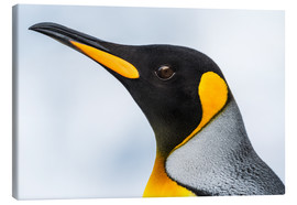 Canvas print  King Penguin - Nick Dale