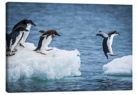 Canvas print  Adelie penguins between two ice floes - Nick Dale