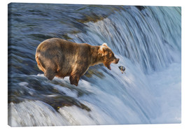 Canvas  Brown bear with jumping red salmon - Gary Schultz