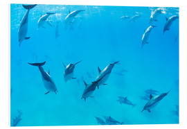 Foam board print  Dolphins under water