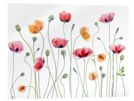 Acrylic glass  Papaver Party - Mandy Disher