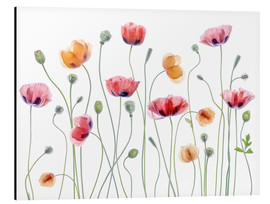 Aluminium print  Poppy party - Mandy Disher