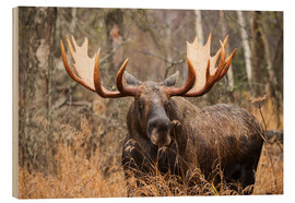 Wood print  Moose in the forest - Doug Lindstrand