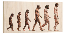 Wood  human evolution - Lionel Bret