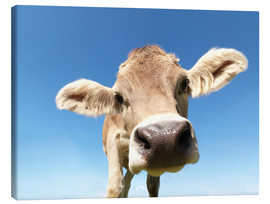 Canvas print  curious cow - Jens Lucking
