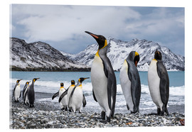 Acrylic glass  King penguins on the beach - Deb Garside