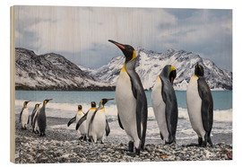 Wood print  King penguins on the beach - Deb Garside