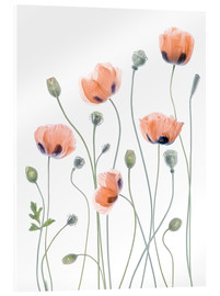 Acrylic glass  Poppy poetry - Mandy Disher