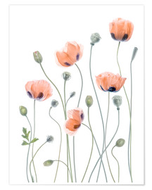 Premium poster  Poppy poetry - Mandy Disher