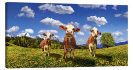 Canvas print  Cows on the pasture - Michael Rucker