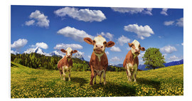 Foam board print  Cows on the pasture - Michael Rucker