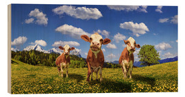 Wood print  Cows on the pasture - Michael Rucker