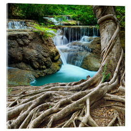 Acrylic print  sprawling roots