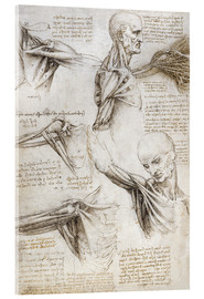 Acrylic print  Muscles and tendons of the shoulder and upper limb - Leonardo da Vinci