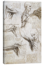 Canvas print  Muscles and tendons of the shoulder and upper limb - Leonardo da Vinci