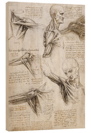 Wood print  Muscles and tendons of the shoulder and upper limb - Leonardo da Vinci