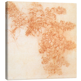 Canvas print  Drawings of plants - Leonardo da Vinci