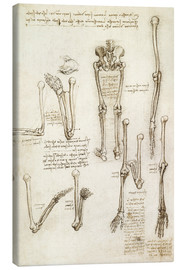Canvas print  the bones of the arm and leg - Leonardo da Vinci