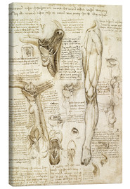 Canvas print  Larynx and leg - Leonardo da Vinci