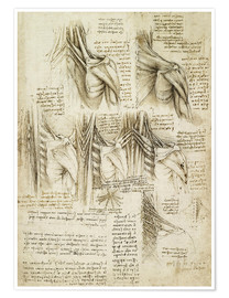 Premium poster  Muscles of the spine - Leonardo da Vinci