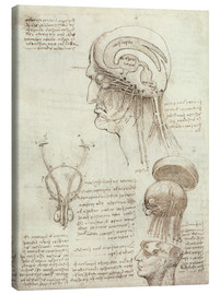 Canvas print  Brain and skull - Leonardo da Vinci