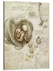 Aluminium print  Studies of embryos - Leonardo da Vinci