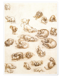 Premium poster  Study of a dog and a cat - Leonardo da Vinci