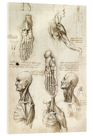 Acrylic print  Neck muscles and bones of the foot - Leonardo da Vinci