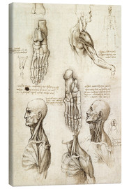 Canvas print  Neck muscles and bones of the foot - Leonardo da Vinci