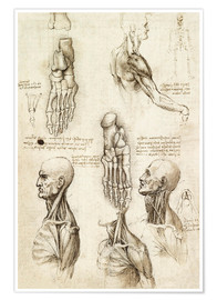 Premium poster  Neck muscles and bones of the foot - Leonardo da Vinci
