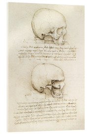 Acrylic glass  The skull - Leonardo da Vinci