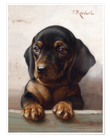 Premium poster Young dachshund