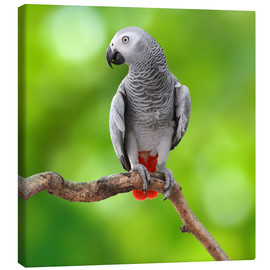 Canvas print  African Grey Parrot