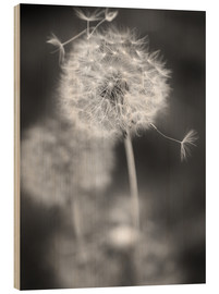 Wood print  Dandelion (black/white) - Julia Delgado
