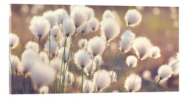 Acrylic glass  Cottongrass - Julia Delgado