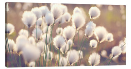 Canvas print  Cottongrass - Julia Delgado