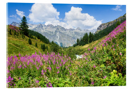 Acrylic print  Flowers in the summer in the Engadine in Switzerland - Jan Christopher Becke
